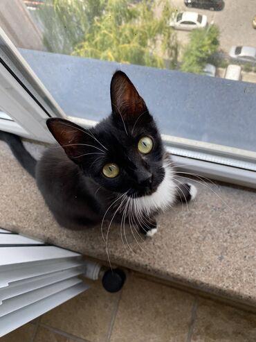 Отдам кошку в добрые руки по причине переезда Приучена к лотку,блошек