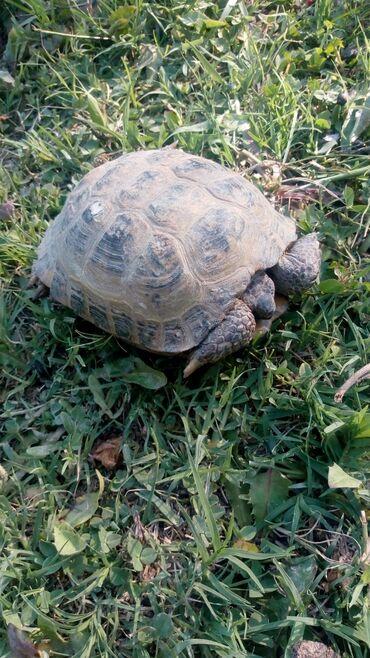 Другие животные - Кыргызстан: Другие животные