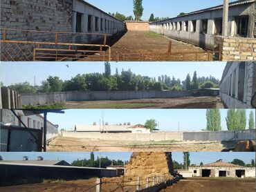 Заводы и фабрики - Кыргызстан: Животноводческий комплекс, откормочная база, молочная
