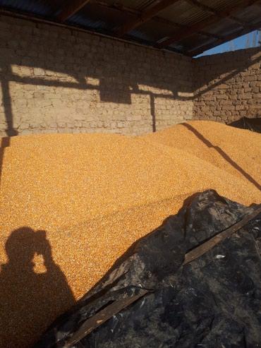 Продаю кукурузу в Бишкек