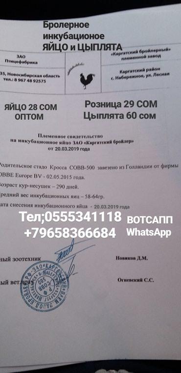 КОББ 500 рос308-708 ЯЙЦО Бролерное в Саразм