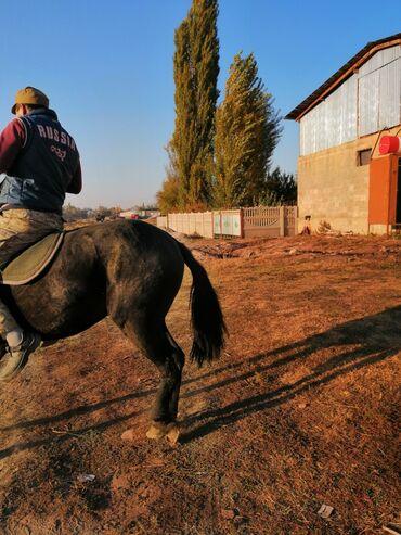 фрунзе гипермаркет бишкек в Кыргызстан: Кунан сатылат рос 1.50 см баасы 160 мин сом телефон кеми бар адрес