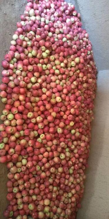 Яблоки домашние сорт атлас и криптон.сочные сладкие