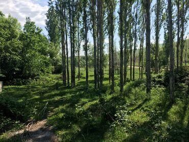 Недвижимость - Кызыл-Туу: 30 соток, Для сельского хозяйства, Собственник, Красная книга, Тех паспорт