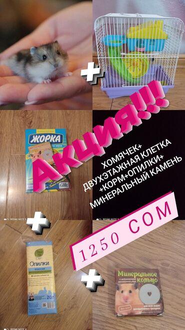 Хомяки - Кыргызстан: АКЦИЯ!!!! Весь комплект: хомячек джунгарский+ оборудованная