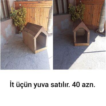 İtlər - Xırdalan: İtlər