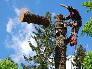 Пилю деревья Бишкек и пригороды.Срубить дерево.Спилить ветки.Бак