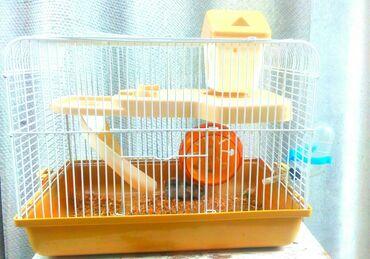 Хомяки в Кыргызстан: Продаю клетку с хомячком+ подарокПродаю двух этахную клеткув