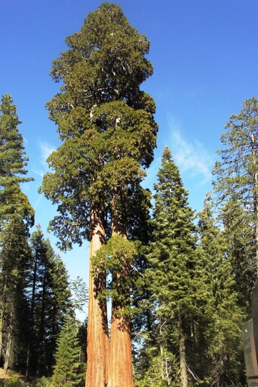 Услуги - Араван: Пилью деревья разные