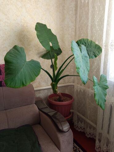 Цветы домой и в офис  Приемлемые цены