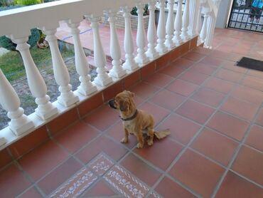 Χαριζεται σκυλος 1 ετους καλος φυλακας μπειτε στο λινκ να τον δειte