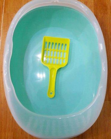 balaca itler satilir - Azərbaycan: Piwikler ve balaca itler ucun tualet satilir