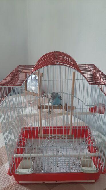 Животные - Ала-Тоо: Продаю клетку