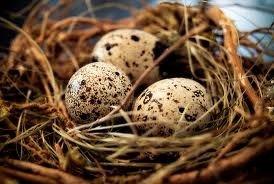 Перепелинные яйца цена за 10 шт   в Кок-Ой