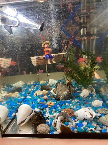 Продаю Аквариум 40 Л, игрушка рыбак, грунт, фильтр, лампа, 10 рыб