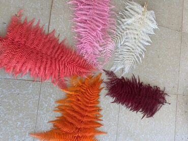 Сухой нашатырь - Кыргызстан: Сухоцветы натуральные! Рынок Джунхай Проход 5-й Контейнер 510-й Ватсап