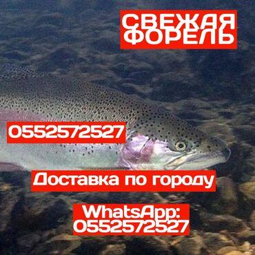 Форель Рыба Радужная форель выращенная в проточной воде и кормится тол