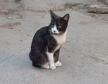 супер кудалар 2 in Кыргызстан | СУУГА ТҮШҮҮЧҮ КИЙИМ: Коты Фонд помощи животным Добрые Руки ищет дом для стерилизованной(к