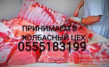 прием макулатуры бишкек адреса в Кыргызстан: Прием БРАК коров телок лошадей и быков в любом виде