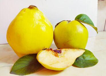 Ostalo - Novi Sad: Domaća voćna rakija od Dunja. Ograničena količina!Proizvedena po