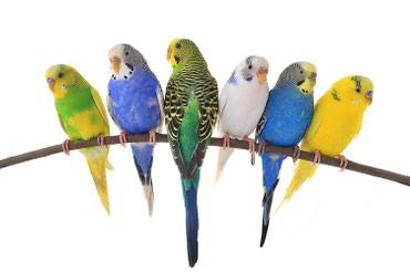 Разноцветные попугаи в Бишкек