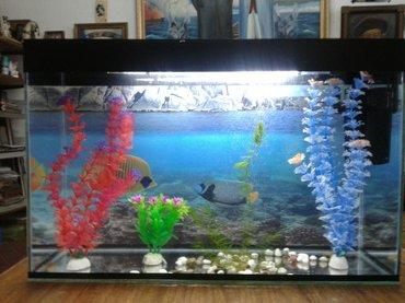 продаю аквариумы  в полном комплекте 38 литровый. есть лампа, фильтр,  в Бишкек