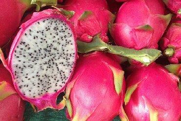 """monstera bitkisi - Azərbaycan: Pitaxaya bitkisi. """"Dragon fruit"""", драконий фрукт. Xaricdən gətirilmiş"""