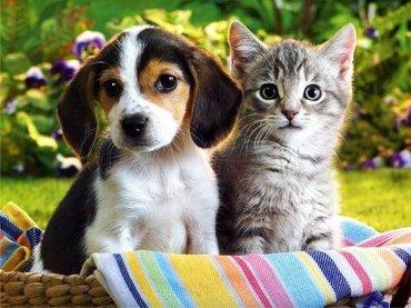 Гостиница для собачек и кошек, в Бишкек