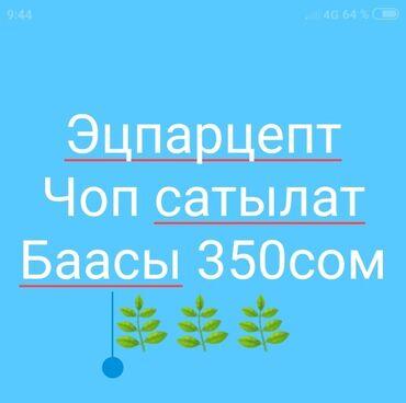 36 объявлений   ЖИВОТНЫЕ: Эцпарцент чоп сатылат!!! Баасы 350сомдон Г.Каракол. Тел.!