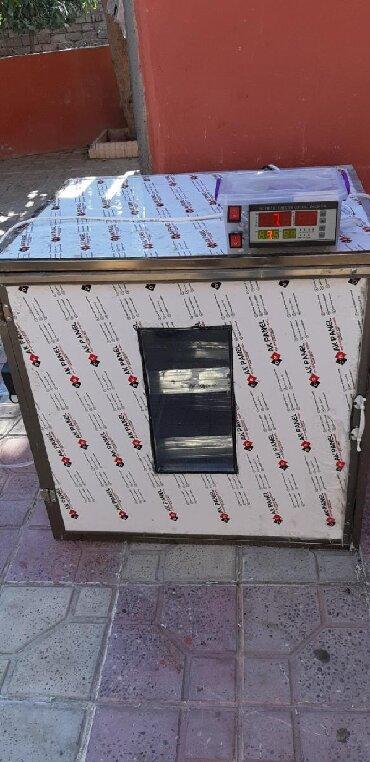 qirqovul satiram в Азербайджан: İnqbator toyuq qaz ördek hinduşka bildirçin qirqovul yumurtası