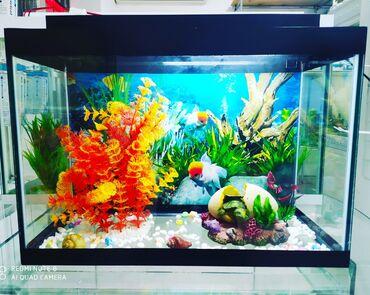 "elektron termometr - Azərbaycan: #akvarium satılır."" Kardinal "" akvarium merkezi- * Akvarium"