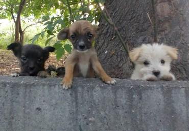 Срочно! Прекрасные щенки в добрые в Сокулук