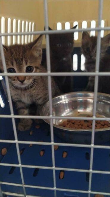 55 объявлений | ЖИВОТНЫЕ: SOS Срочно женщина у которой дома очень много кошек и на улице