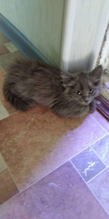 Отдам котенка в хорошие руки!!!  Девочка 2 месяца К лотку приучина Куш
