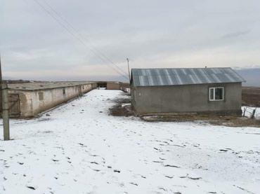 Кашар сатылат Таласта р/н Калба айылында в Сокулук