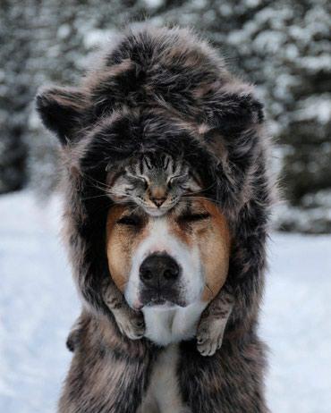 Гостиница для крупных собак на короткий и длительный срок в Бишкек