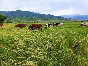 Работа - Заречное: Требуется разнорабочий в фермерское хозяйство. Условия хорошие, есть