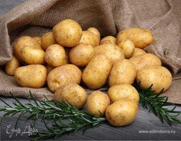 продажа семена в Кыргызстан: Продаю картофель сорт Пикассо18тонн. семенной 6тонн. Цена договорная