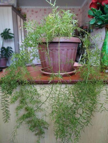 Комнатные растения - Беловодское: Другие комнатные растения