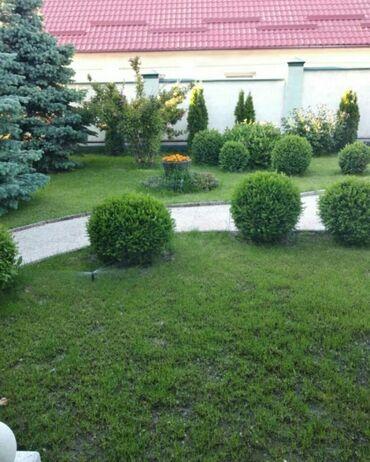 Работа - Ала-Тоо: Садовник универсал:стрижка газона, обрезка хвойных и плодовых