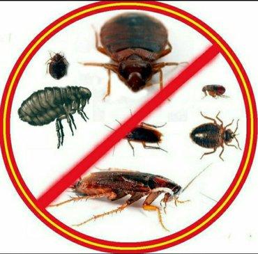 УНИЧТОЖЕНИЕ!!!! НАСЕКОМЫХ, КЛОПОВ, тараканов, клещей.... Наши ценности в Бишкек