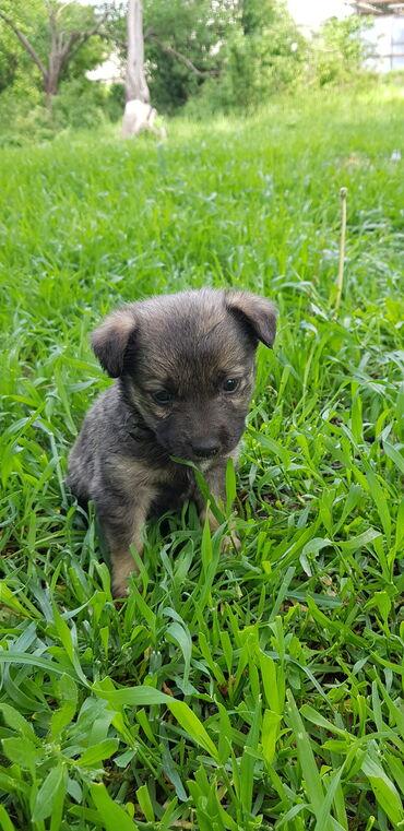 Отдам бесплатно щенка-девочку в добрые руки. Возраст 1,5 месяца