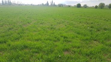 Животные - Ала-Тоо: Возьму в аренду землю сельхозназначения от 15 до 20 га в верхней части