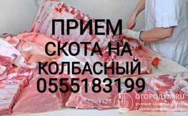 прием макулатуры бишкек адреса в Кыргызстан: Прием СКОТА на ЗАБОЙ в любом виде