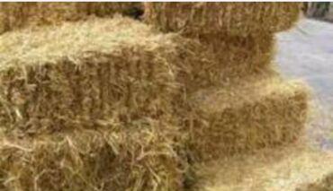 Животные - Пульгон: Куплю клевер из поля 700штук