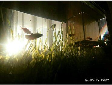 Продаю аквариум 50л. в идеальном состоянииК нему прилагается камни