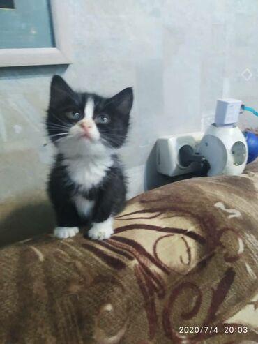 Ищут дом и заботливых хозяев котята. Они обработаны от внешних и внутр