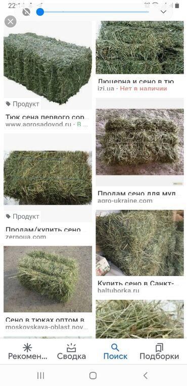 8909 объявлений: Продаю сено люцерна. 1300 тюков