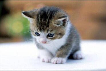 Приму котёнка малыша даром мне 8 лет я очень хочу маленького котёнка я