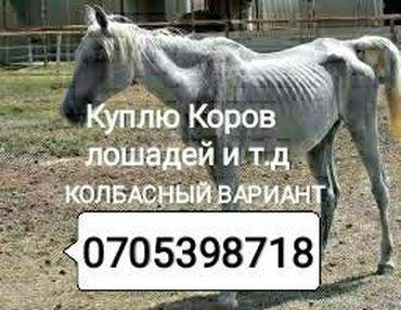 купить ауди а 4 в Кыргызстан: Куплю забой в колбасный цех дорого в любом виде